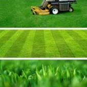 Виды газонов